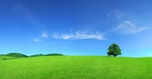Green Pastures of Psalm 23
